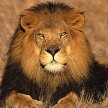 avatar van The-Lion